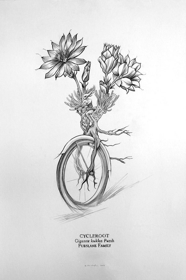 Cycleroot, graphite on Somerset, 12 x 18 in. @ 300 dpi, 2009.